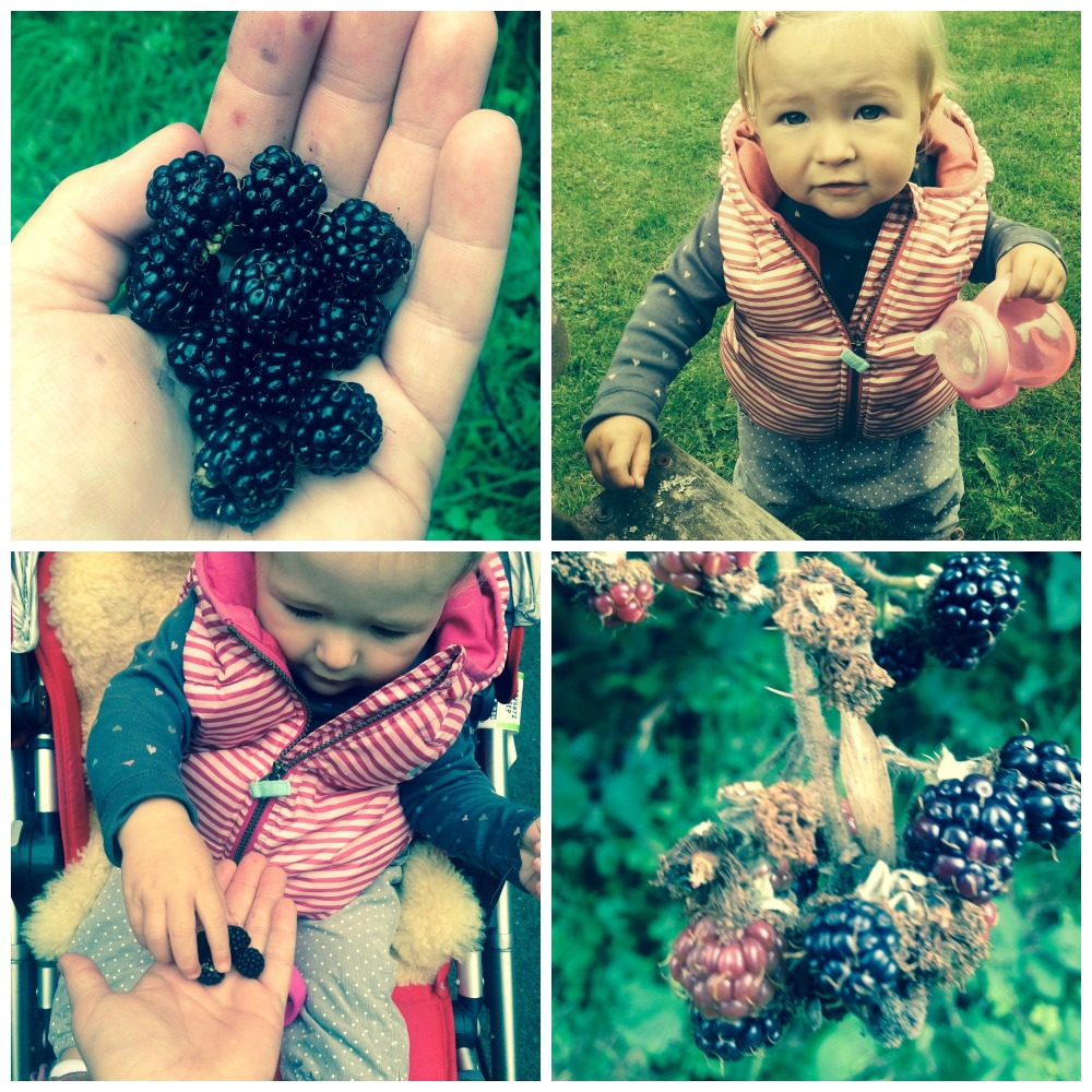 Blackberries1